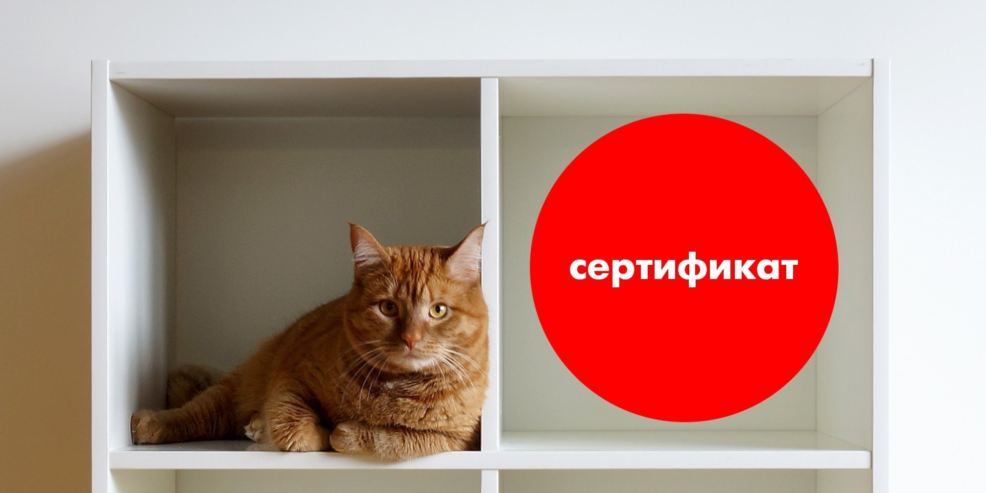 Внимание! Розыгрыш 3 сертификатов на 1000 рублей.